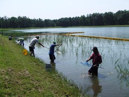 ccnw-pond-070904a1