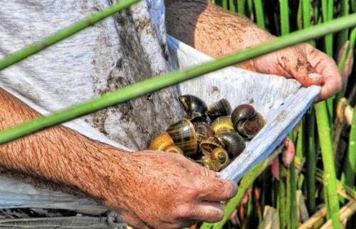 Latest News | Snail Busters
